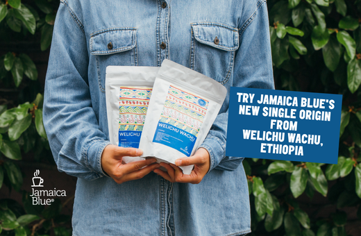 Jamaica Blue's NEW Single Origin