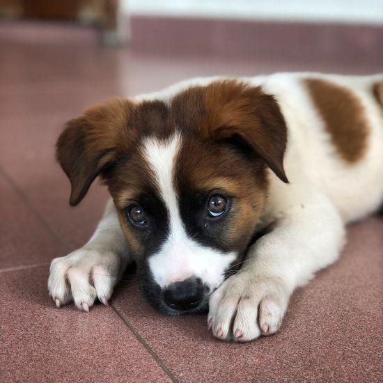 Dog world homepage main puppy pic