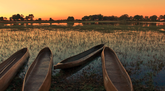 wooden canoes docked on okavango delta river in botswana at sunset