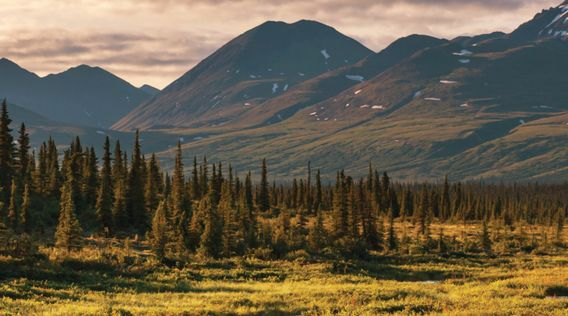 mountain range and forest at denali national park in alaska
