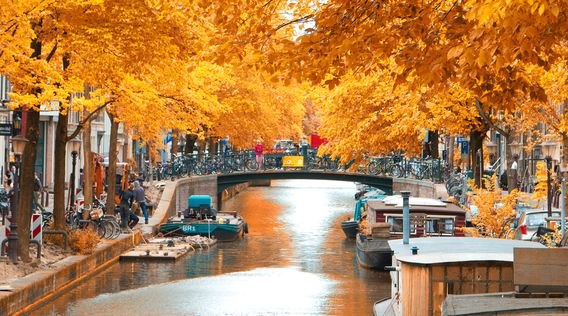 canal in amsterdam surrounded by trees with yellow leaves