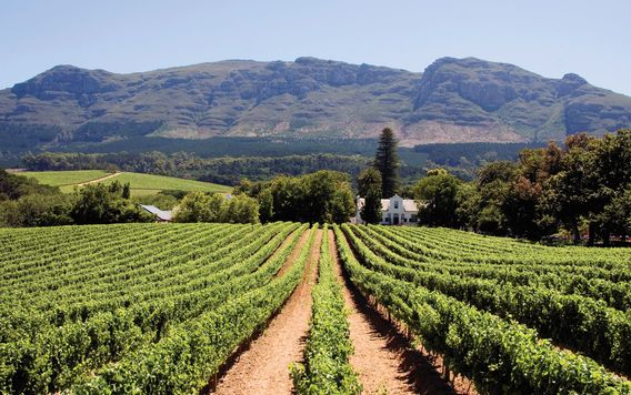vineyard in constantia in cape town south africa