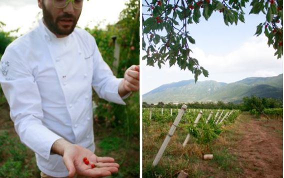 man in white chef coat holding tomatoes at a farm in southern italy