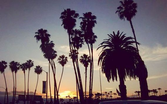 palm tree silhouettes during california sunset