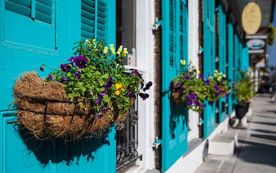purple flowers in baskets hanging off of bright blue doors