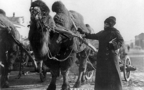 harriet chalmers adams guiding a camel in the gobi desert