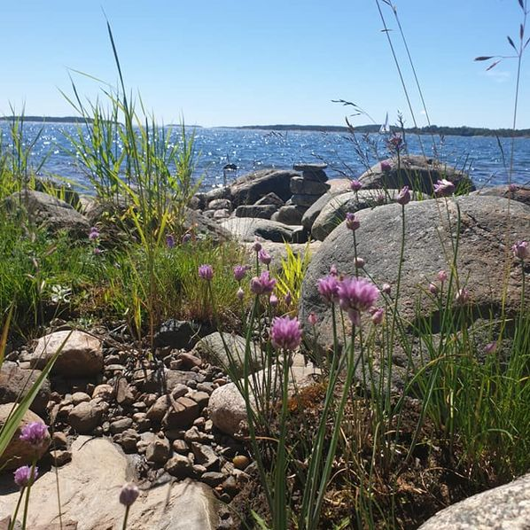 sea view with rocks and flowers in foreground