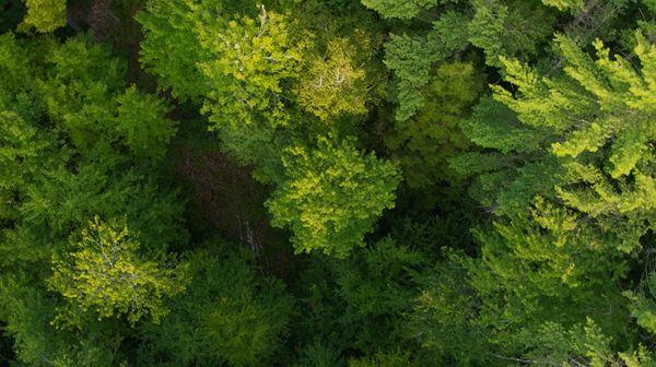 Restoring-Woodlands