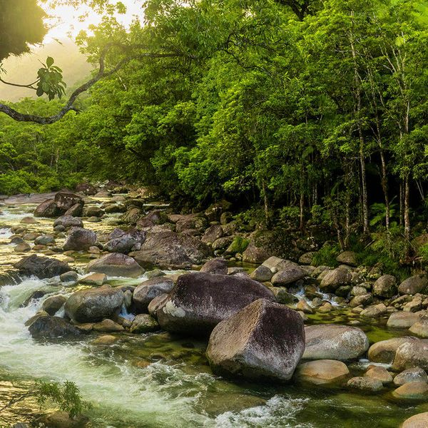 mossman gorge at Daintree National Park in australia