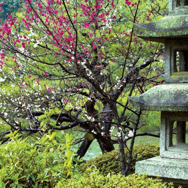 stone lantern at a japanese garden in kyoto