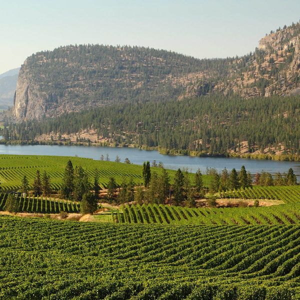 vineyard surrounded by cliffs in okanagan region of canada