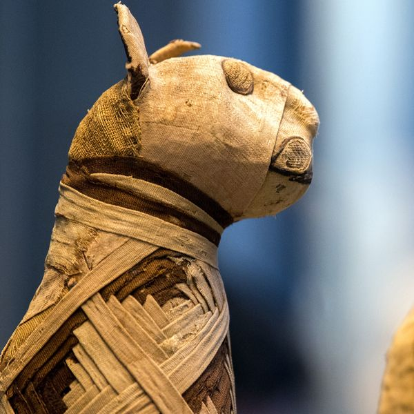 a mummified cat from ancient egypt