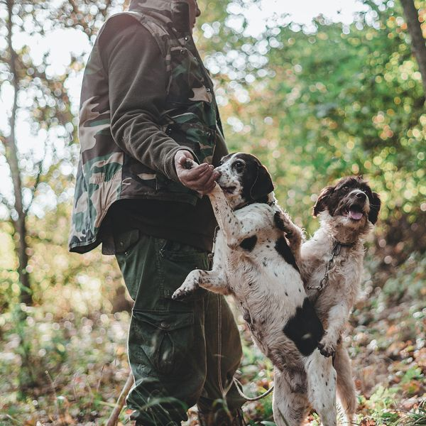 two dogs and a man truffle hunting in the forest of alba italy