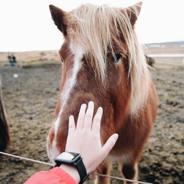 a person reaching out to pet a wild horse