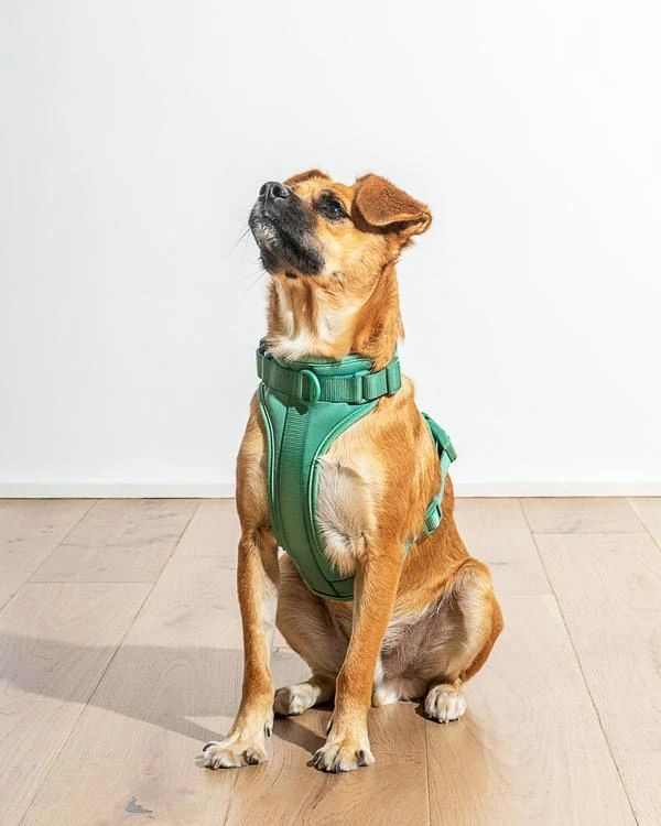 Wild One Comfort Harness — Spruce