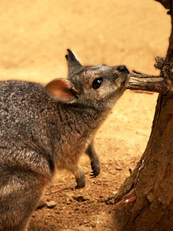 6 Unique Animals Of Australia Ef Go Ahead Tours