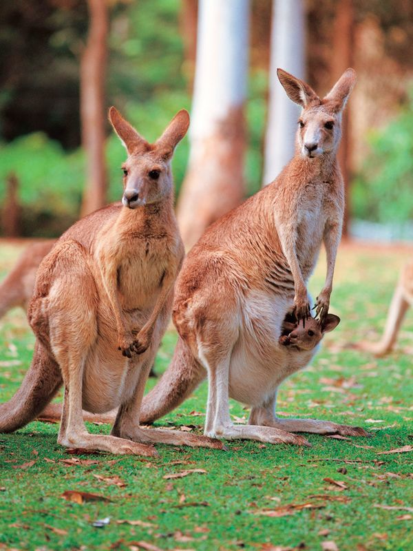 6 Unique Animals of Australia | EF Go Ahead Tours