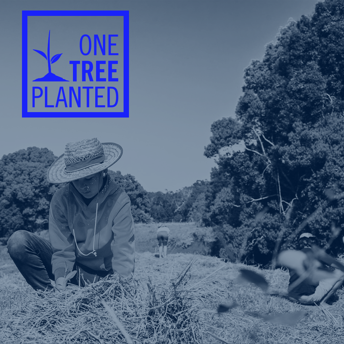 A World-Changing Partnership: R+Co BLEU + One Tree Planted
