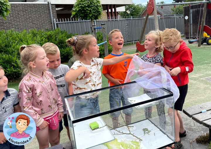 vlinders in de klas, vlinderstichting, kleuteridee