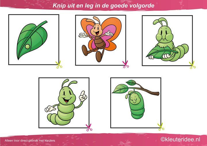 Knip uit en leg de plaatjes in logische volgorde van ei tot vlinder, kleuteridee.nl, cut out and sequece butterfly life cycle free printable