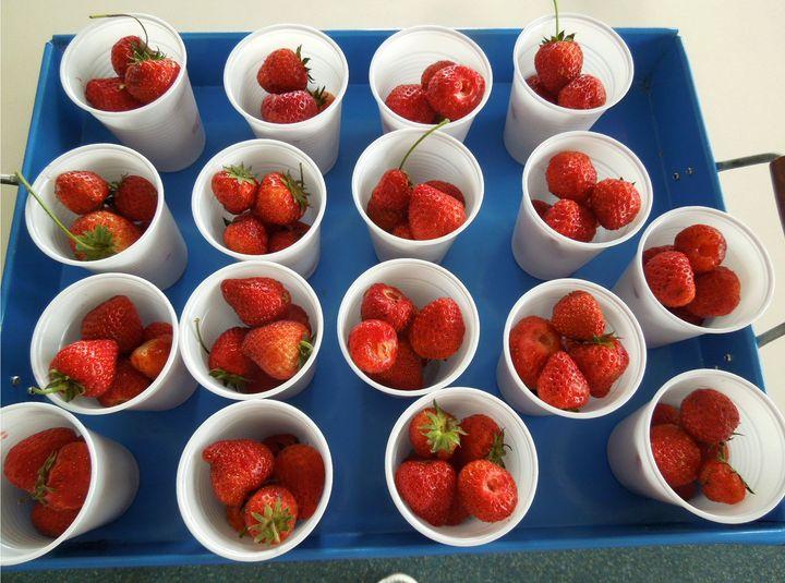 Ideeën voor de schooltuin voor kleuters week 10, kleuteridee , aardbeienoogst van deze week