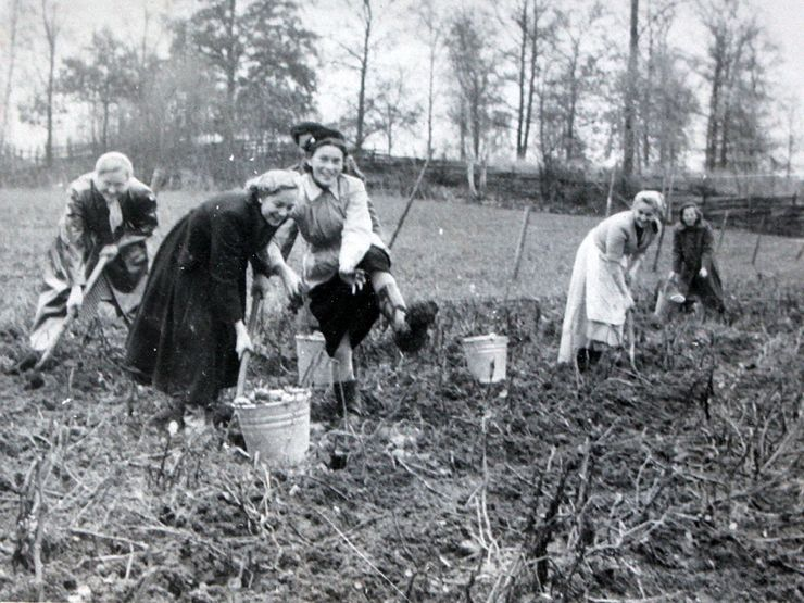 Liljeholmen 50-tal plocka potatis