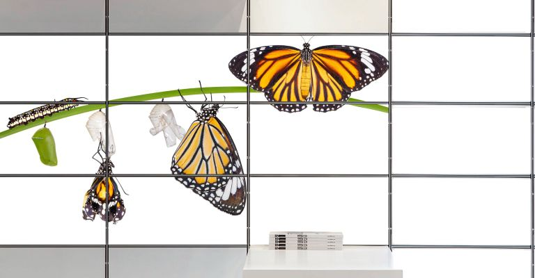 A wall made up of lit panels displaying an image of the butterfly metamorphosis from caterpillar to butterfly.