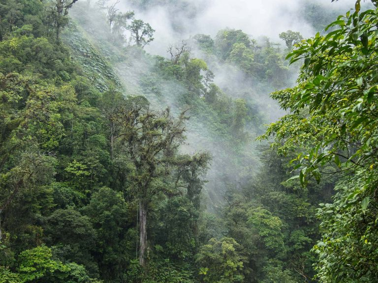Discover a Cloud Forest in Monteverde, Costa Rica
