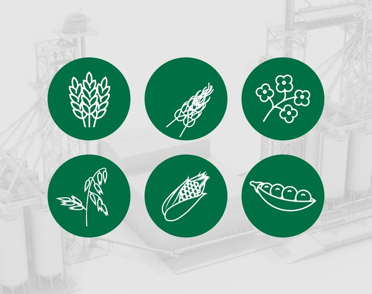 Icons for 6 different types of grain types