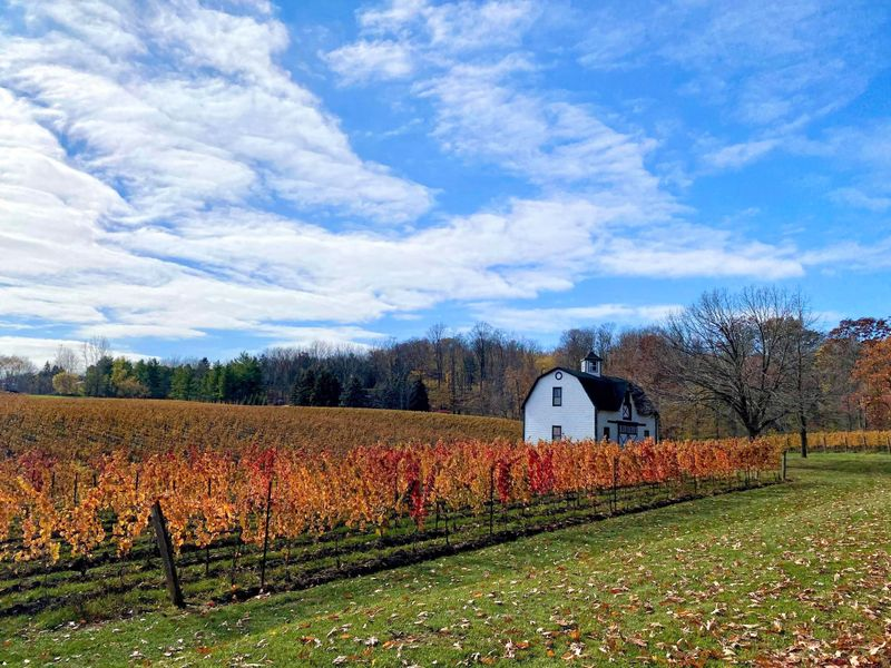 The Fall harvest in Lincoln, Ontario