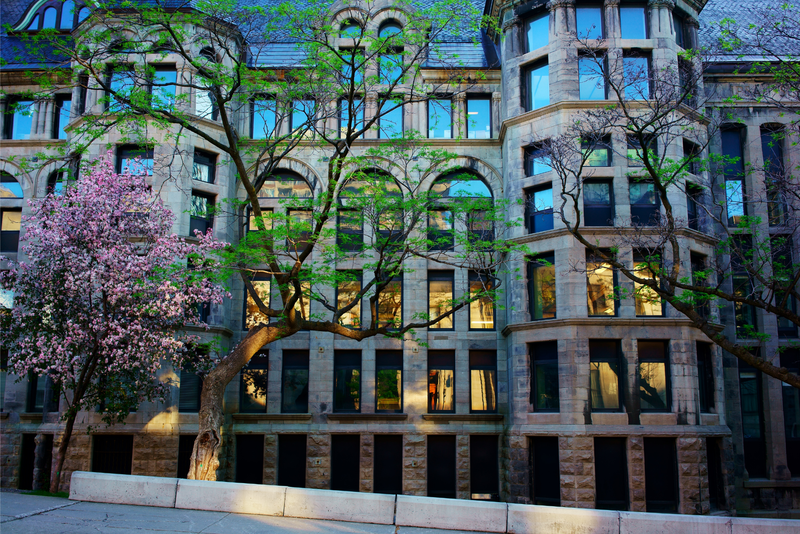 Cherry and Magnolia trees in front of a building in Montreal