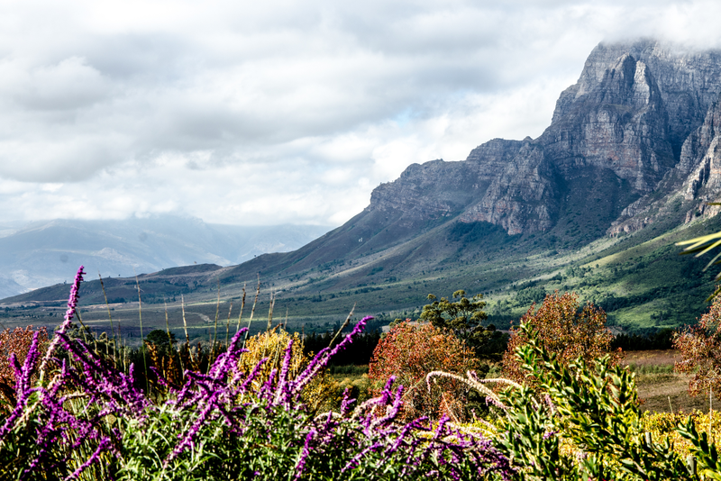 A view of the gorgeous rugged mountains in the wine region of Stellenbosch, South Africa.