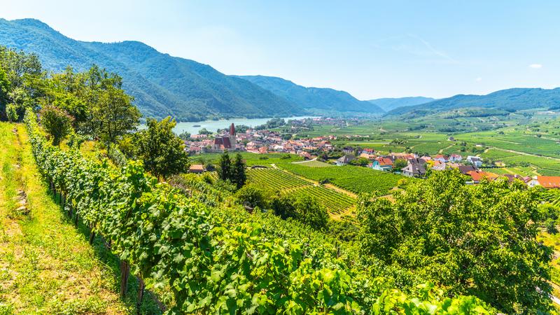 Landscape of vineyards and Danube River at Weissenkirchen, Austria