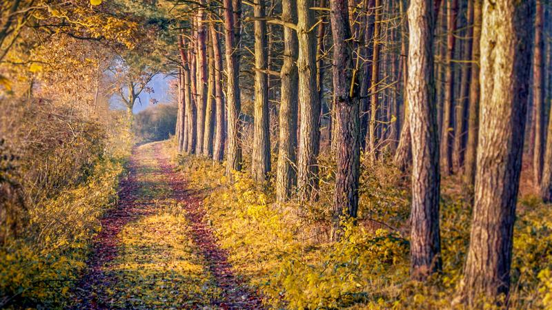 Trail leading through Sherwood Forest in Nottingham, UK.