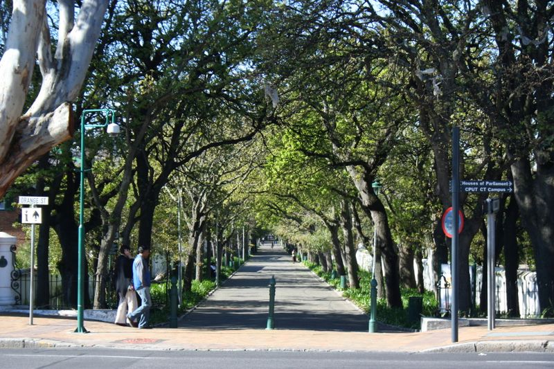 The Company Gardens in Cape Town