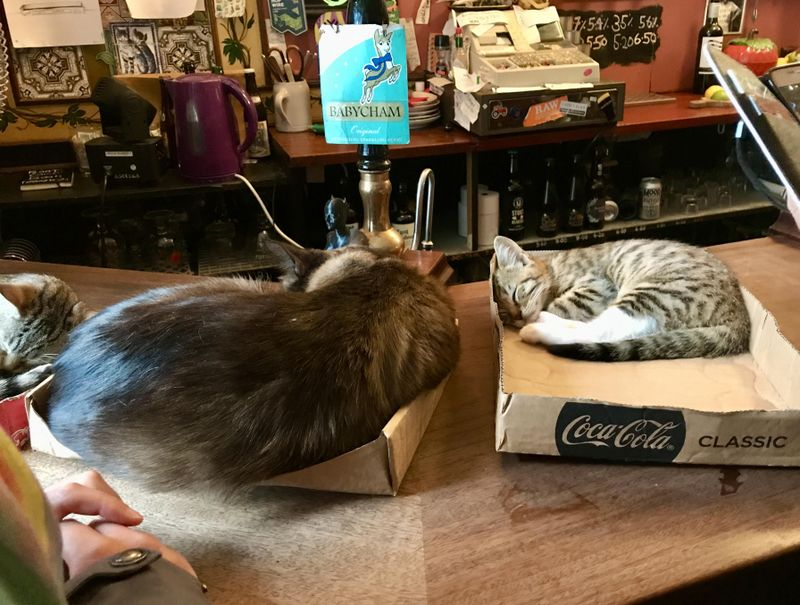 Cats at the pub in Bristol