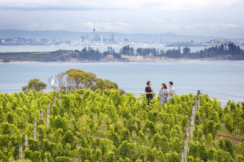 Views from a vineyard on Waiheke Island.