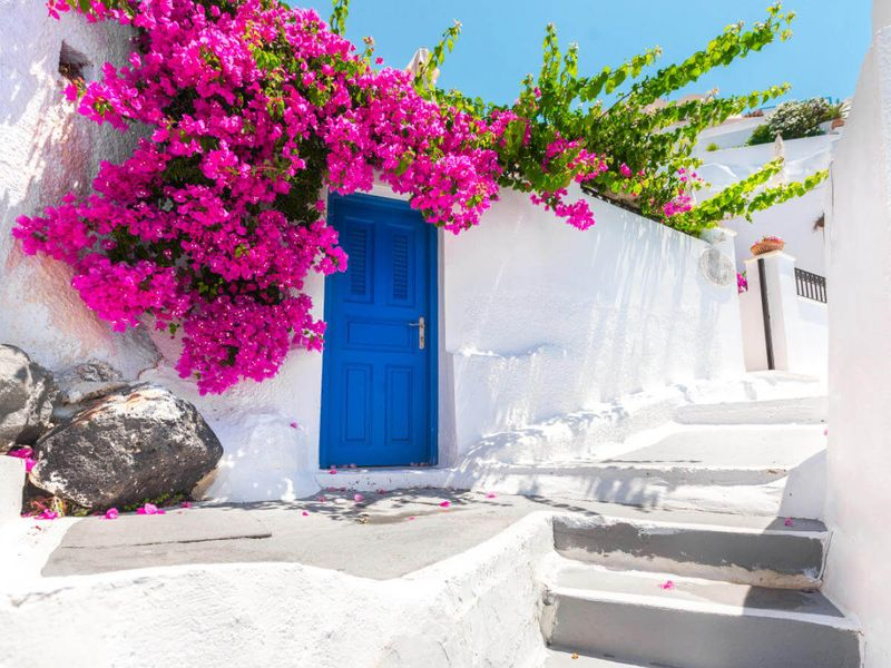 bright pink flowers surrounding royal blue door on white building in greece