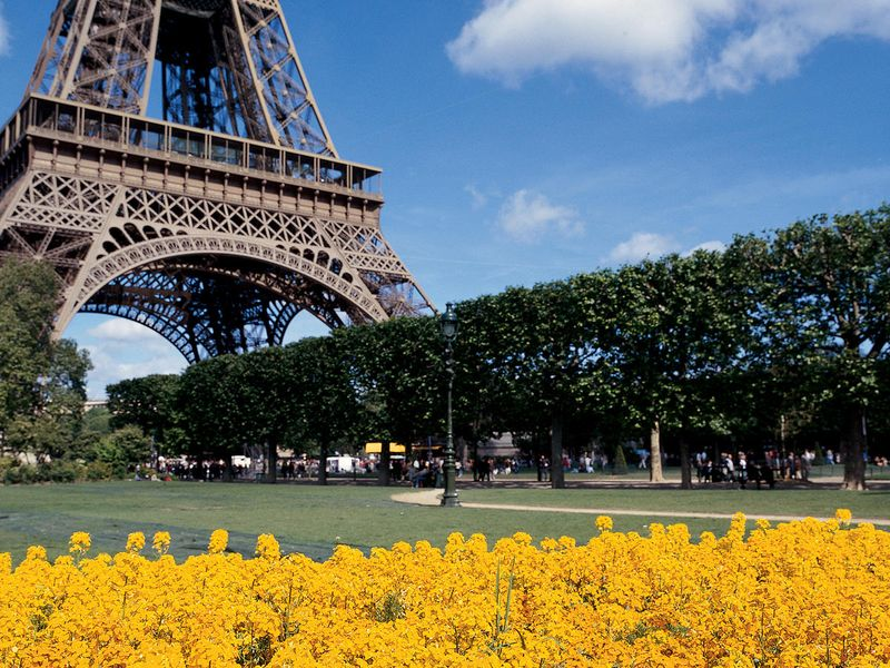 patch of yellow flowers in front of eiffel tower in paris on sunny day