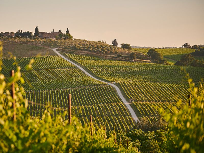 Beautiful Tuscany vineyard in Italy at sunset
