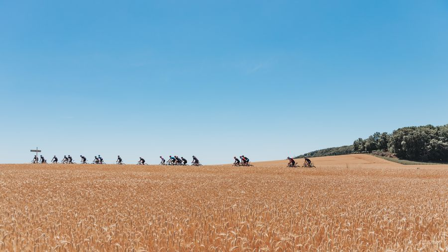 Road cyclists passing by a field