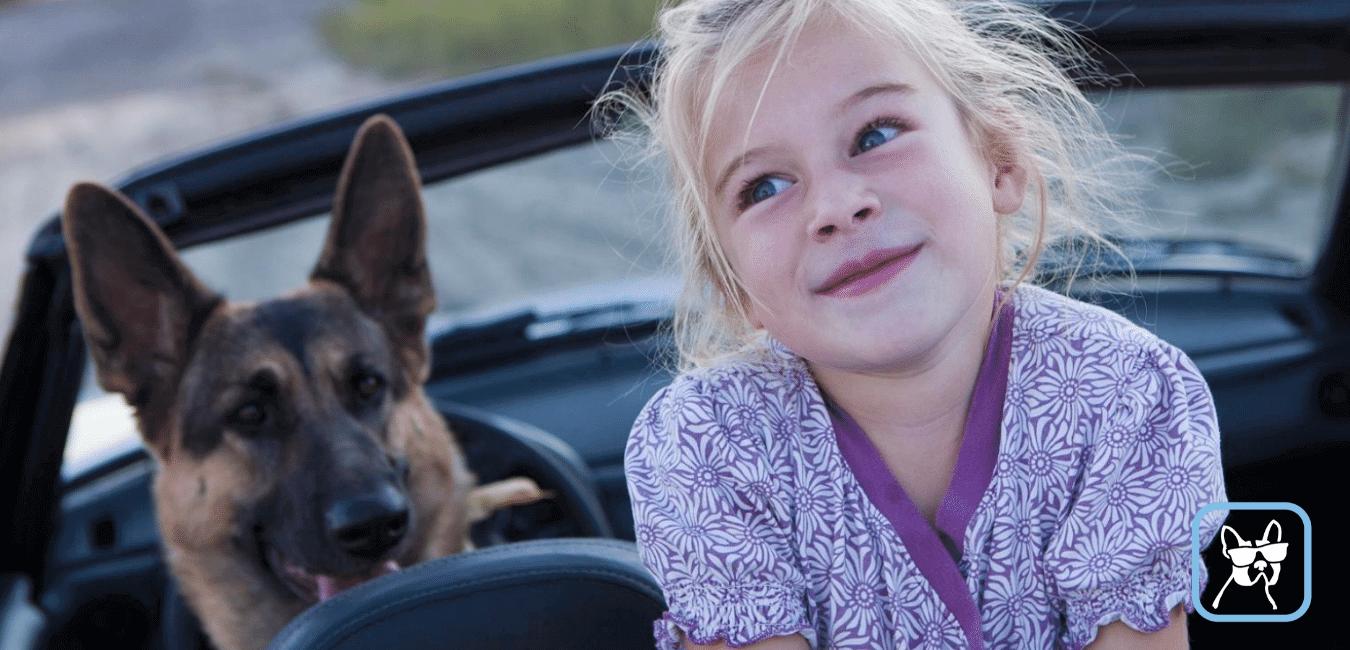 De kosten van een hondenoppas
