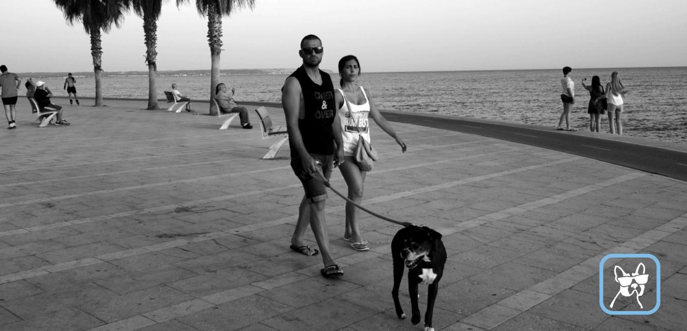 Dog walker dog walking
