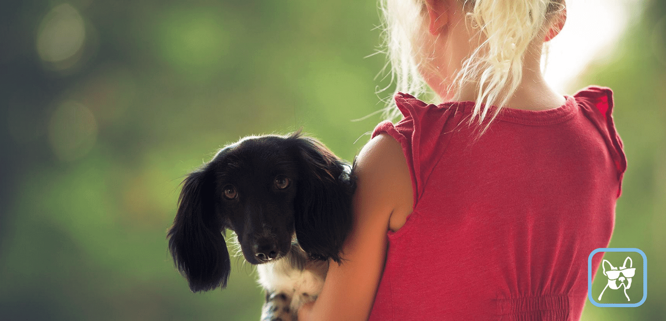 Anuncios de cuidadores de perros
