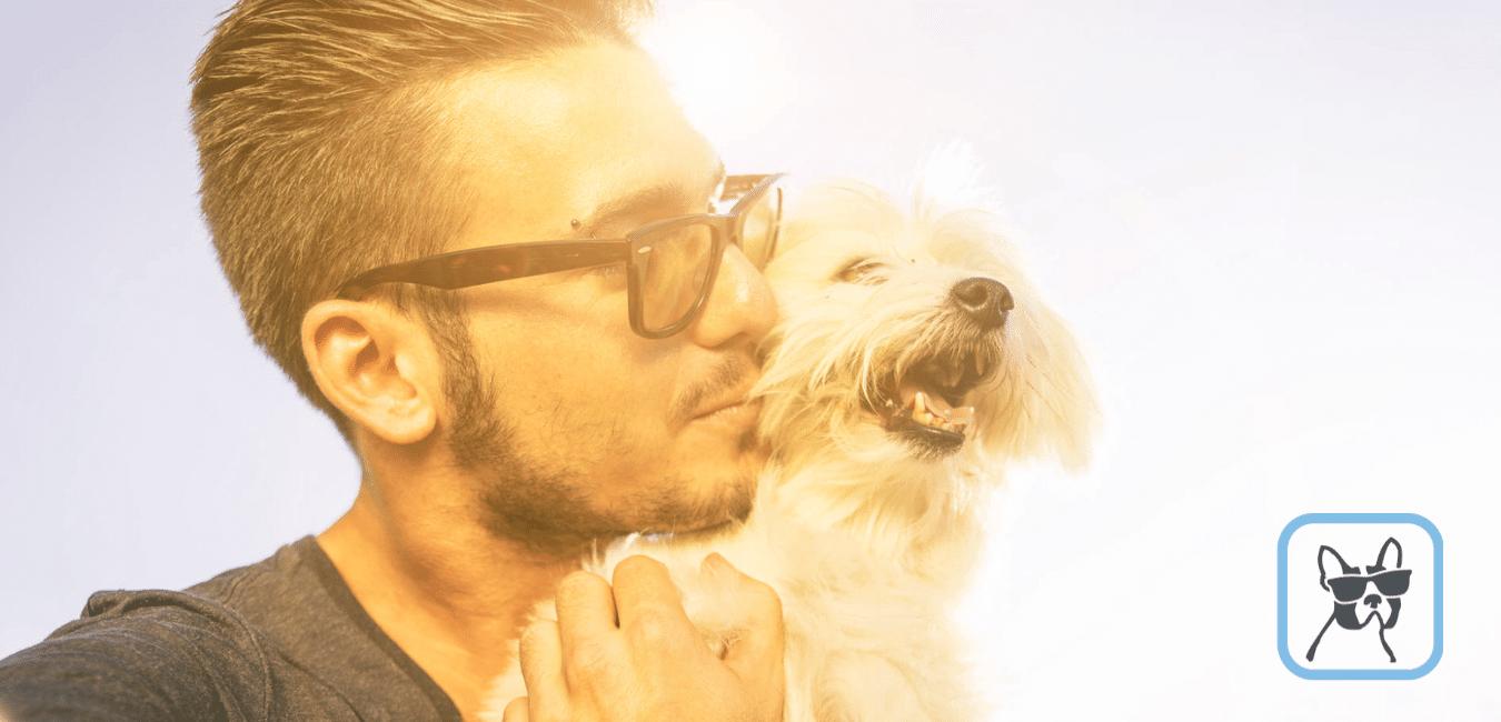 Pet sitter, il lavoro ideale