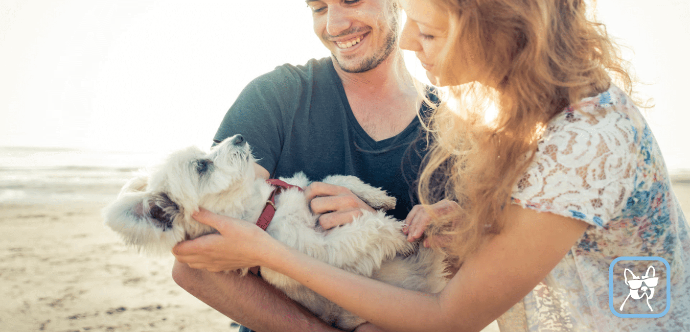 How much does a pet sitter earn?