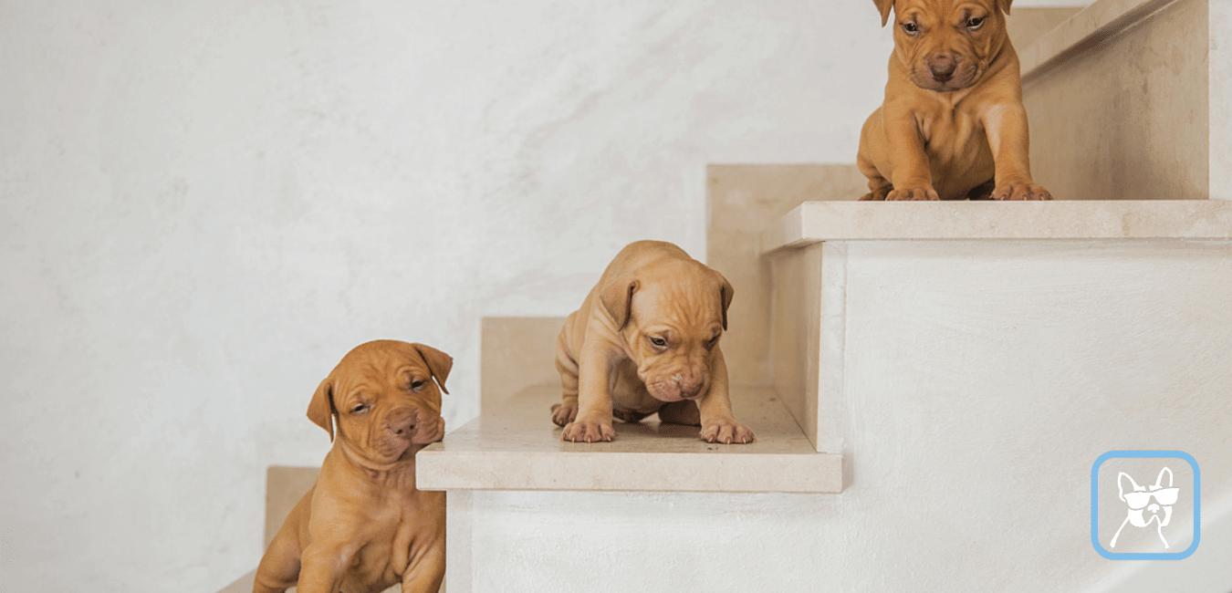 hundebetreuung in einer pension