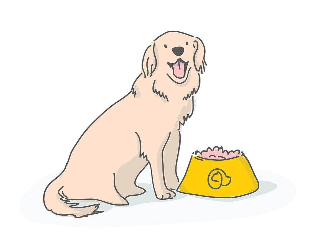 golden retriever chien