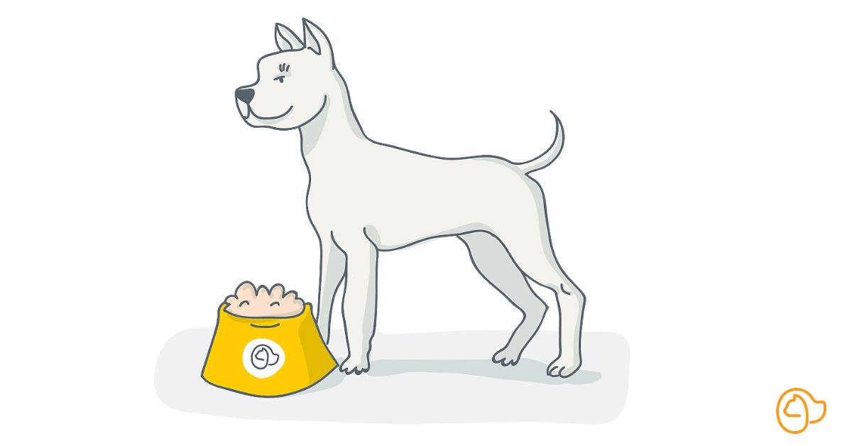 Dogue argentin chien