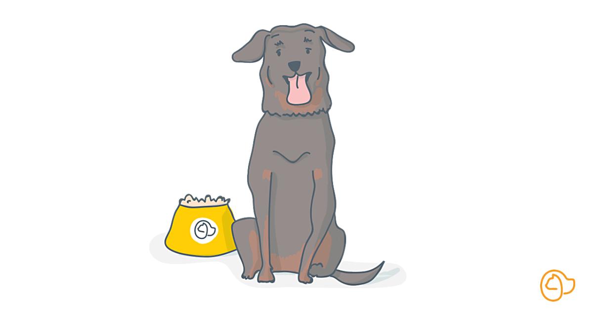 beauceron chien